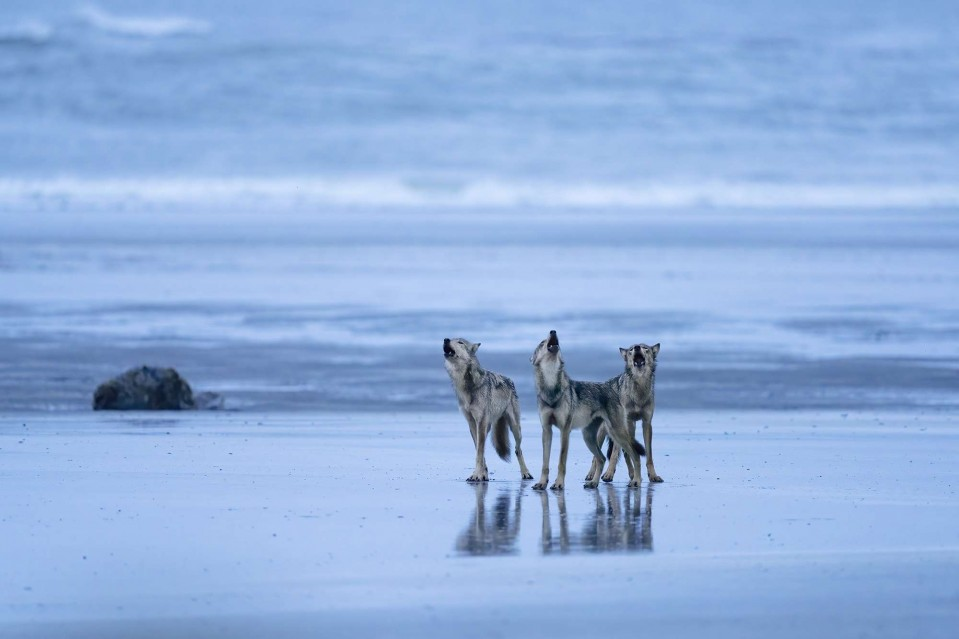 Sea Tribe - Paul NICKLEN