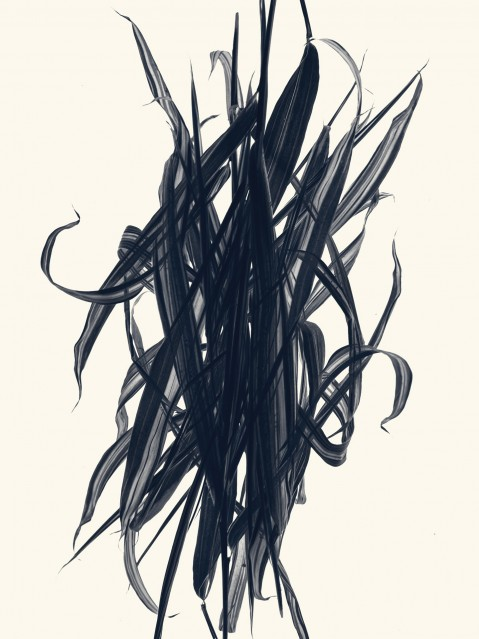 Bambou nain - Pleioblastus - Rachel LEVY