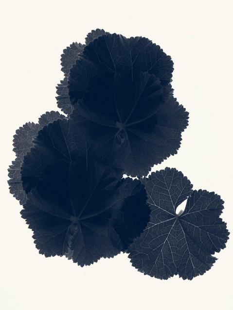 Geranium Vivace - Rachel LEVY