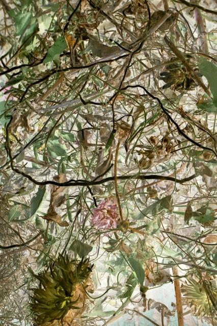 Compost 20 Septembre - 2 - Rachel LEVY