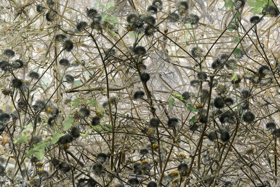 Compost 20 Aout - Rachel LEVY