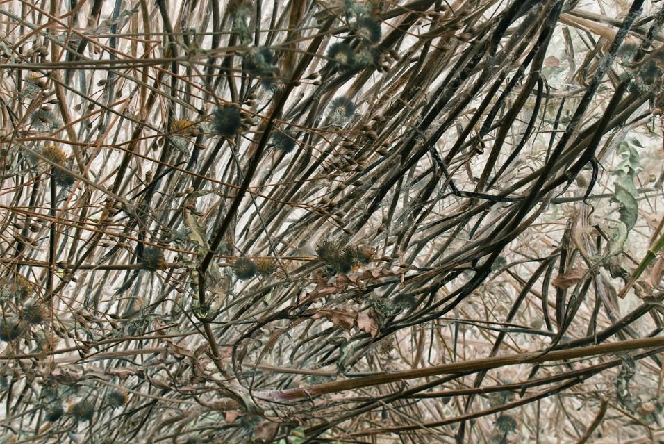 Compost 21 Aout - Rachel LEVY