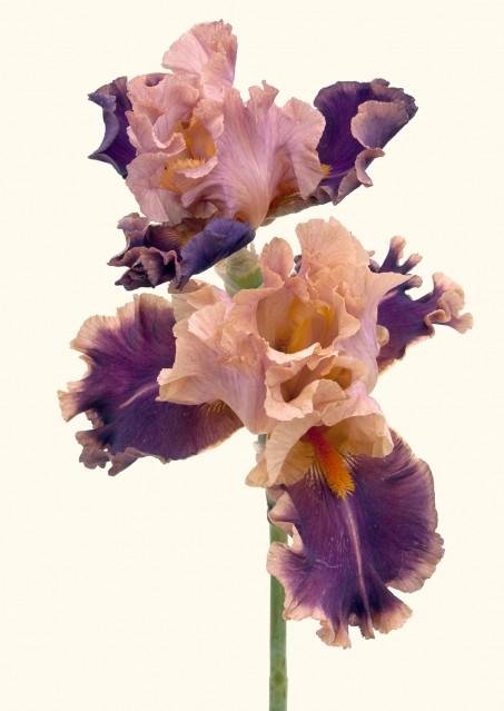 Impressionist - Rachel LEVY