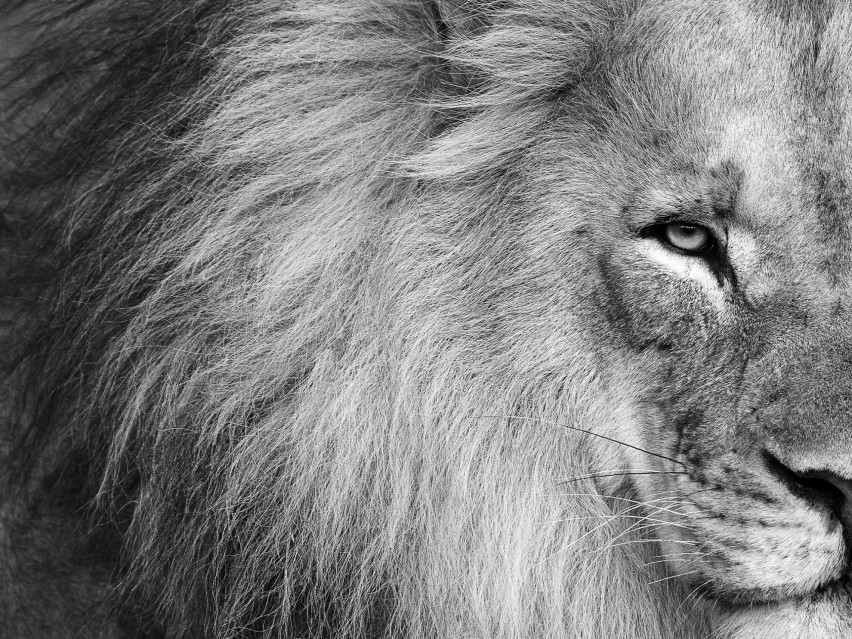 King of Africa - Kyriakos KAZIRAS