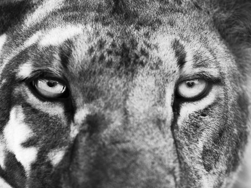 Wild World - Kyriakos KAZIRAS