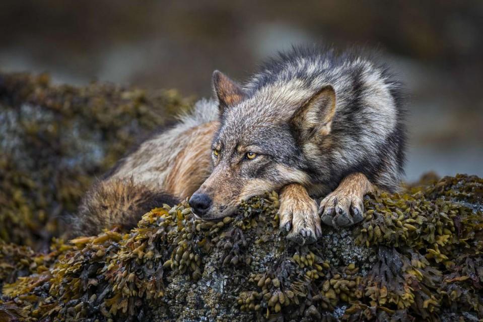 On the Rocks - Paul NICKLEN