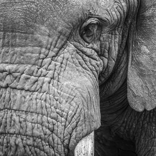 More than leather & ivory - Stéphane AISENBERG