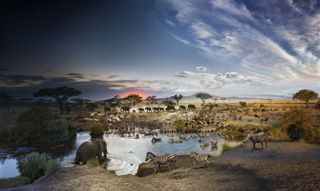 Serengeti National Park, Tanzania - Stephen WILKES