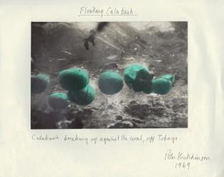 Floating Calabash, 1969