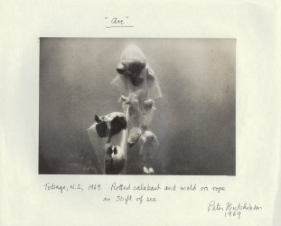 Arc, 1969