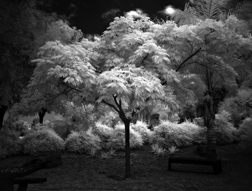 Angel Tree - Mitch DOBROWNER