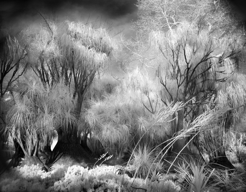 Garden Trees - Mitch DOBROWNER