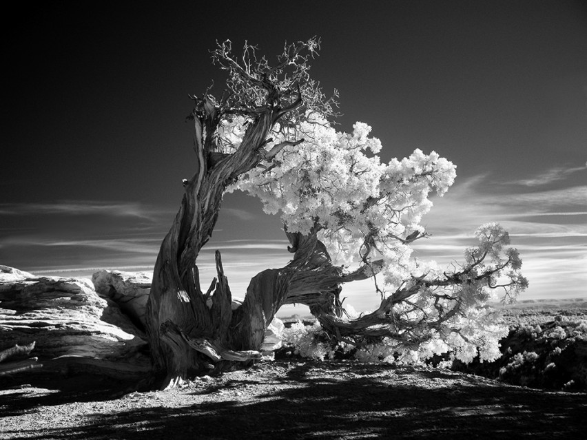Twisted Tree - Mitch DOBROWNER
