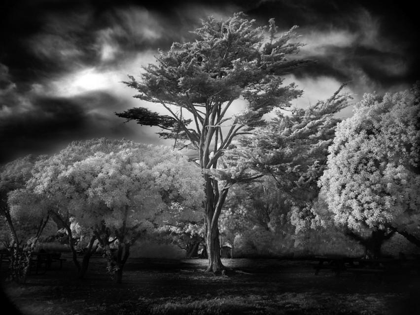 Wind Swept Tree - Mitch DOBROWNER