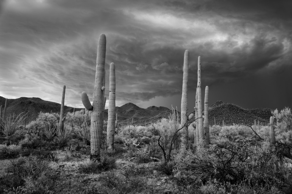 Saguaro and Storm - Mitch DOBROWNER
