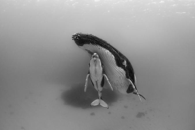 Baleines - Orques
