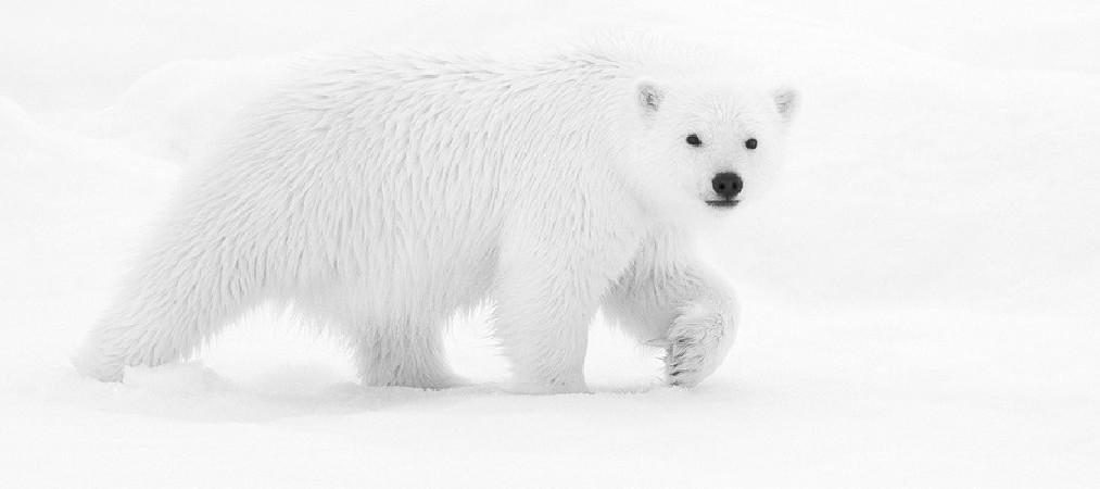 Arktos