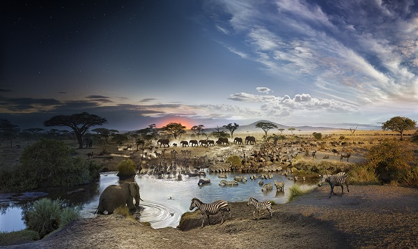 Wildlife photography in the plains of Serengeti. Stephen Wilkes took pictures of animals gathering around a water point.