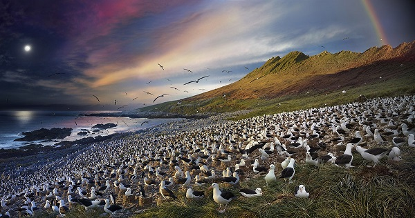 Photo by Stephen Wilkes published in national geographic, a prestigious magazine about wildlife.