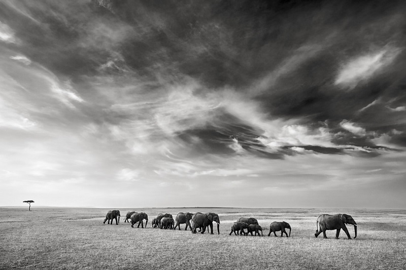 Elephant herd photographed by wildlife photographer Kyriakos KAZIRAS.