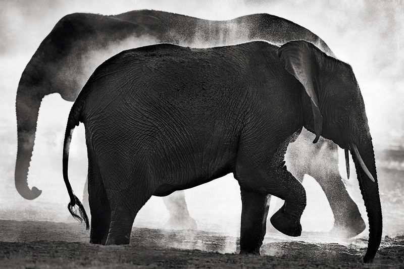 Two silhouettes of elephants in the dust.