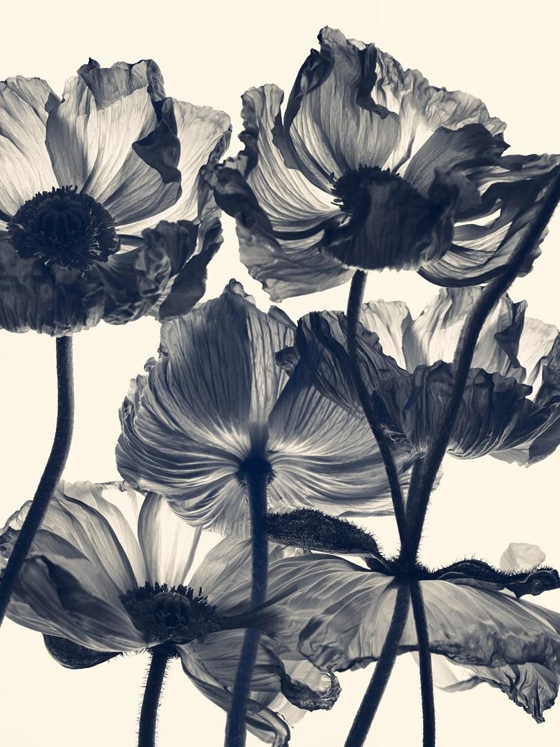 Rachel-Levy-Herbarium