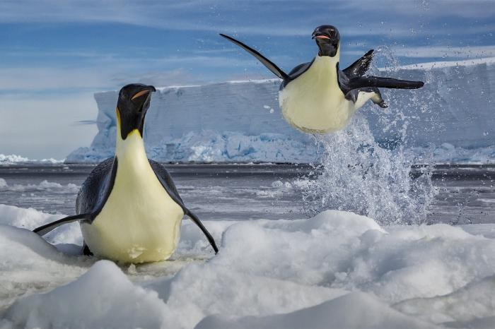 La photographie d'animaux polaires